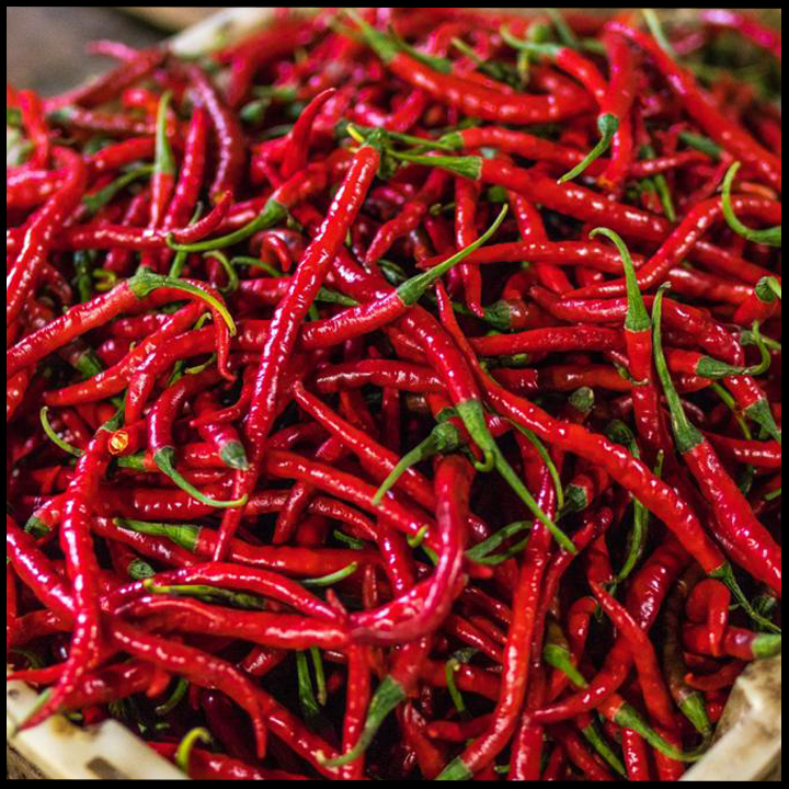 Assam Red Chilly