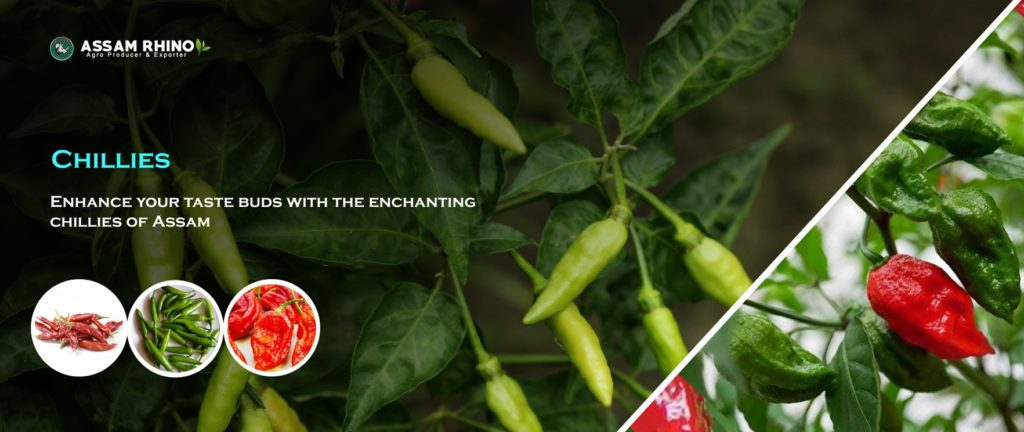 Assam ChilliesAssam | Agricultural Products Exports